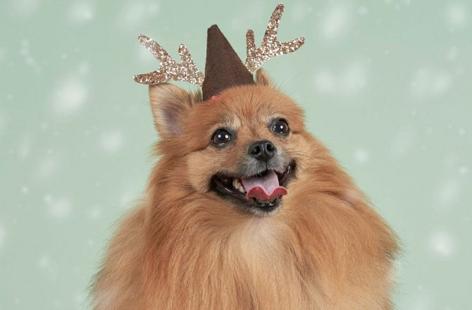 GIFTMAS GUIDE FOR FUR CHILDREN